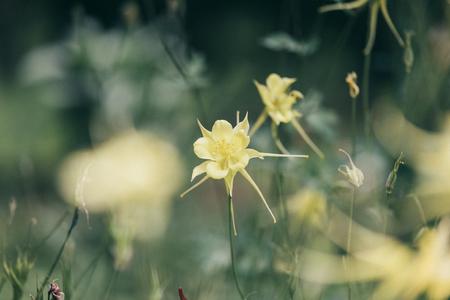 여름꽃-노란꽃-감성사진-감성-색감