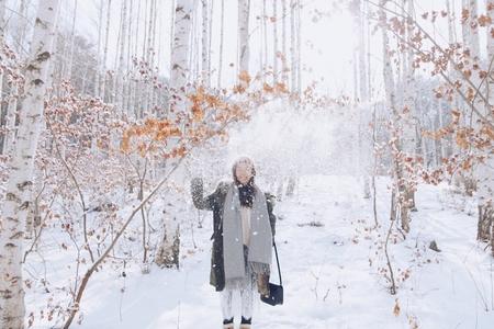 인제-자작나무숲-겨울-산-계절