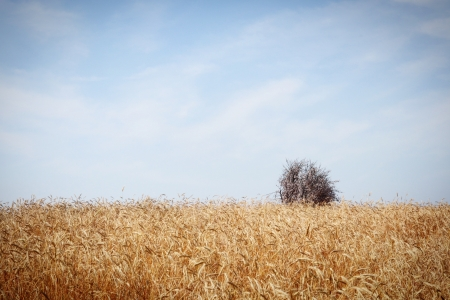 호밀밭-안성팜랜드-아련한-하늘-sky