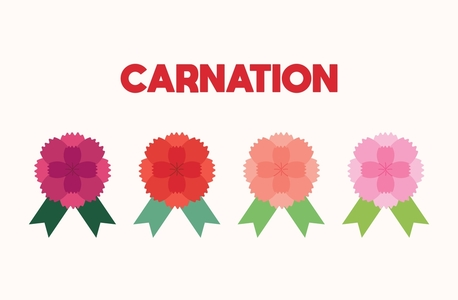 카네이션-꽃-가정의달-어버이날-스승의날