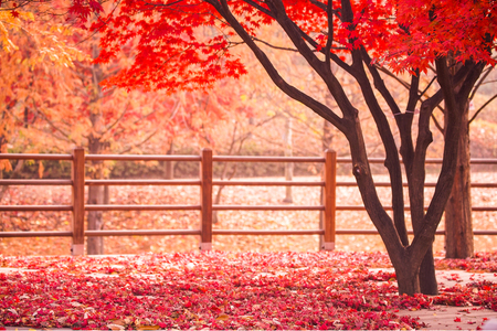 가을-낙엽-단풍-공원-나무