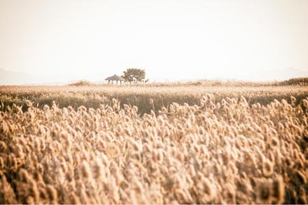 가을-계절-갈대-순천만-자연