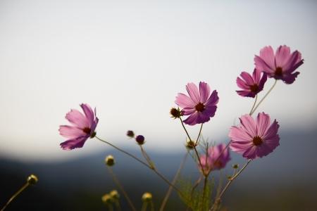 가을-꽃-풍경-감성-식물