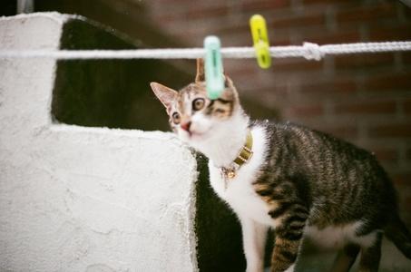 고양이-반려묘-겨울-동물-감성사진