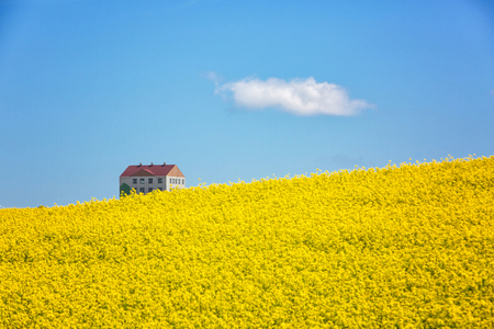유채밭-유채꽃-봄-하늘-바탕화면