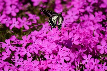 호랑나비-나비-곤충-벌레-동물