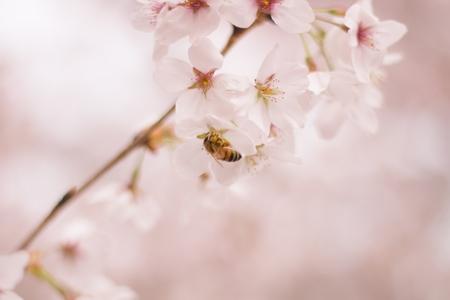 flower-floral-closeup-nature-spring