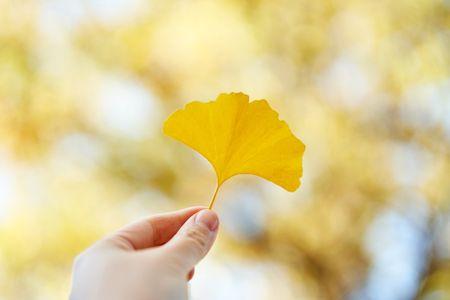 가을-낙엽-은행-은행잎-노란색