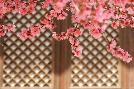 매화-홍매화-꽃-봄-봄꽃