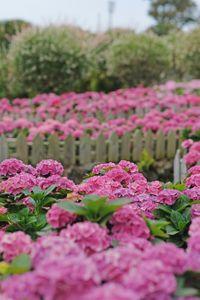 plant-식물-flower-blossom-꽃