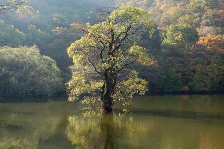 주산지-저수지-호수-나무-왕버들