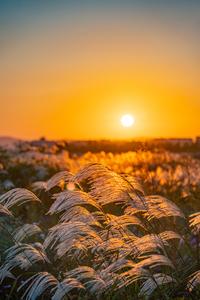 억새-flamegrass-silvergrass-일몰-sunset