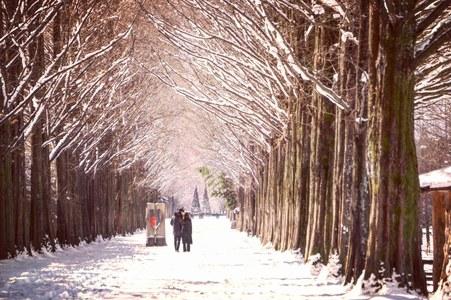 겨울-눈-담양-메타세콰이어길-감성