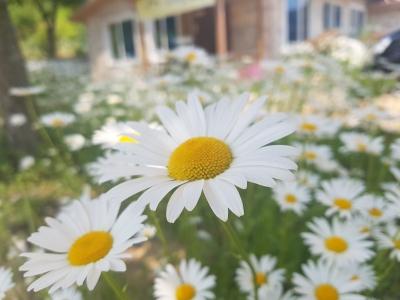 문배마을-등산-들꽃-민들레-강촌
