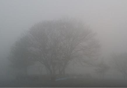 새벽-안개-겨울나무-판매-사진