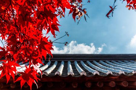 가을-낙엽-기와-단풍-서정