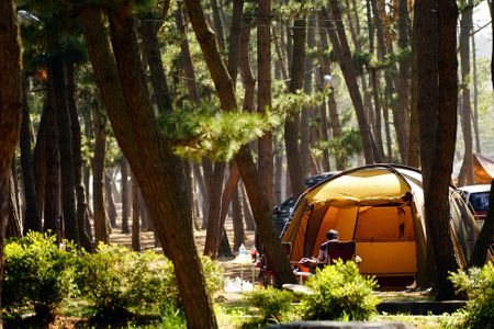 캠핑-캠퍼-자연-숲-소나무
