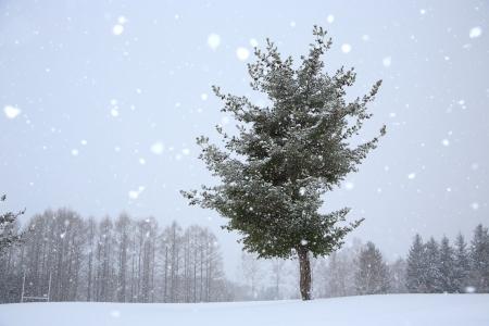 일본-홋카이도-눈송이-배경-비에이