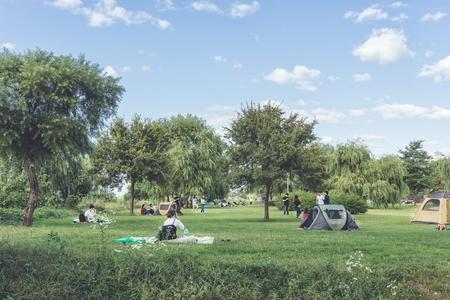 한강-시민공원-나무-숲-공원