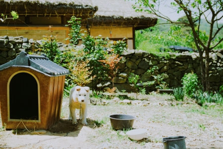 시골-시골집-강아지-시골강아지-한옥
