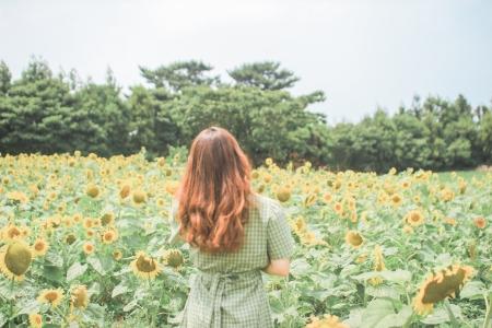 제주도-해바라기-풍경-여름-여행