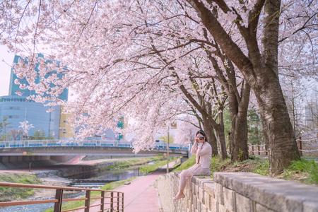 벚꽃-양재시민의숲-여자-여성-봄