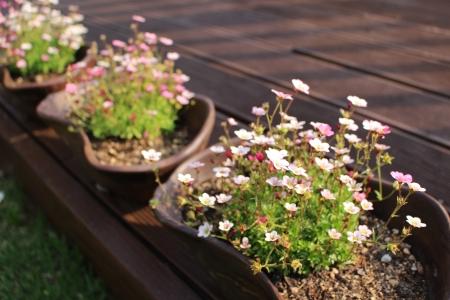 꽃-들꽃-식물-자연-생명