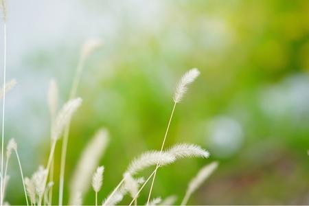 꽃-보케-아웃포커싱-봄-초록