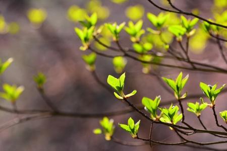 봄-그린-잎새-새순-새싹