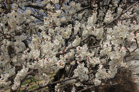 매화-자연-풍경-꽃-매화꽃